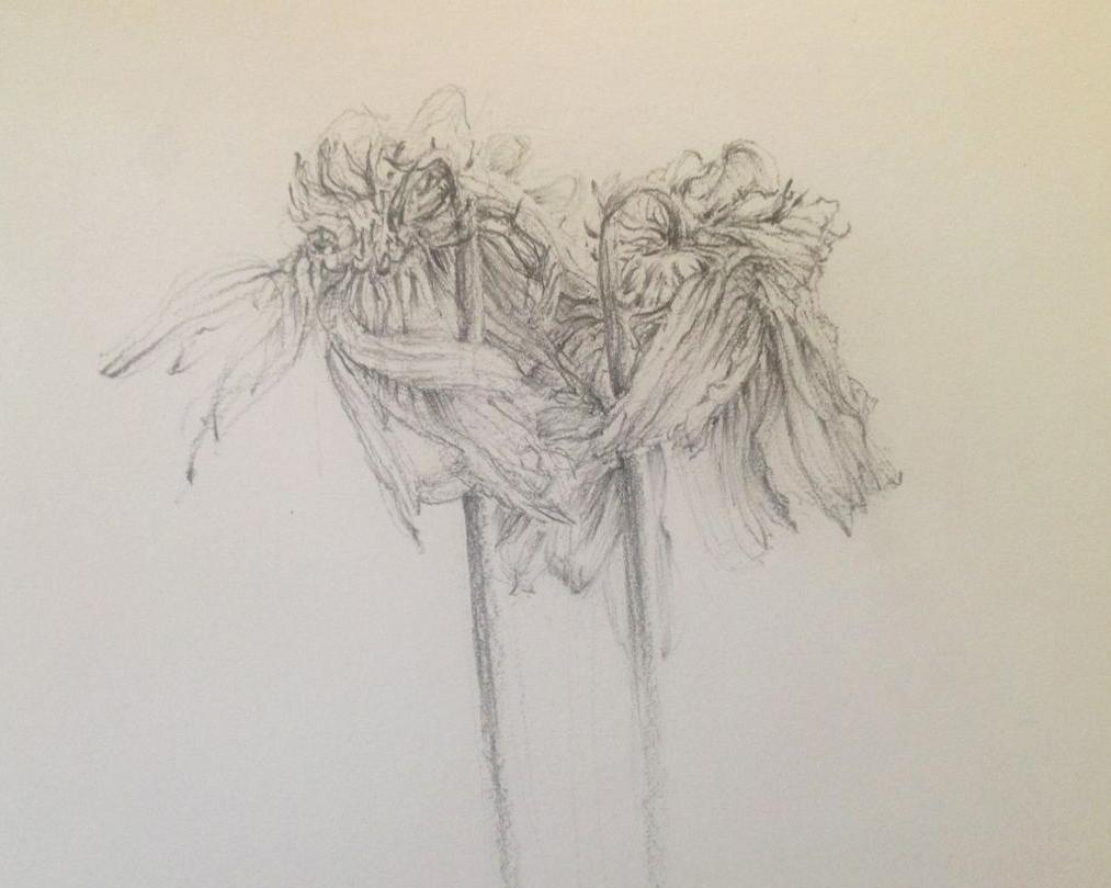 flower2d