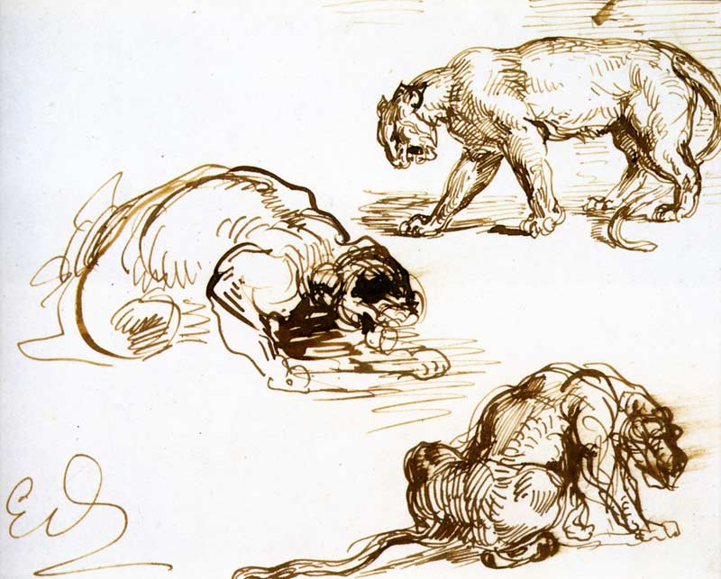 The Great Lions Of Drawing The Scribbles Institute