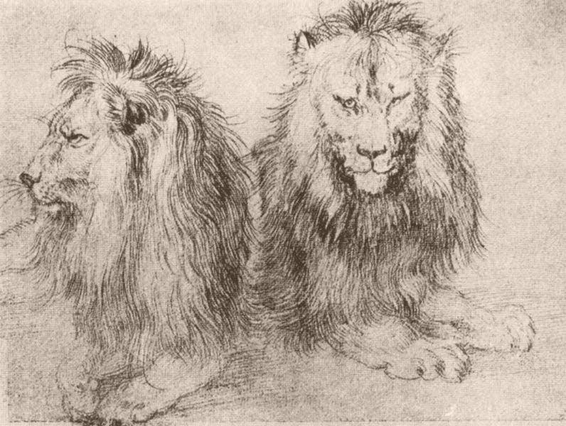 durer-lion2s