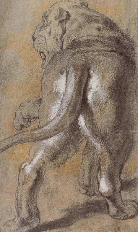 rubens-lion