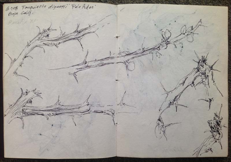 drawing-habit-branch