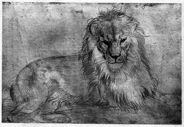 durer-lying-lion